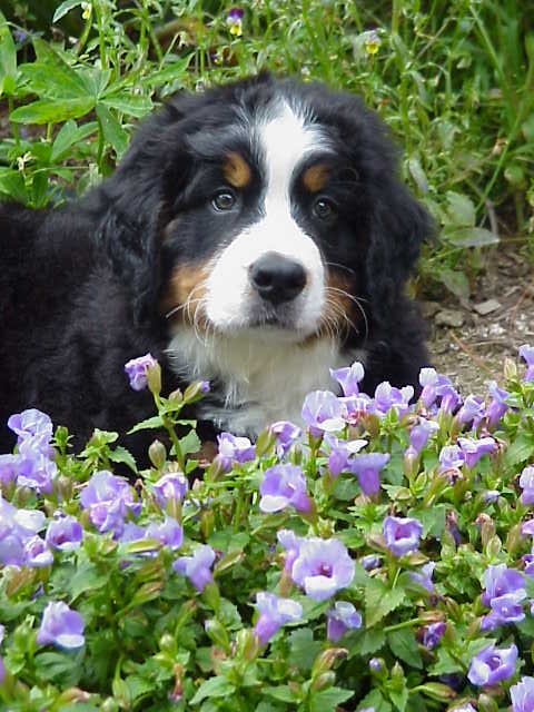 cabot in the garden